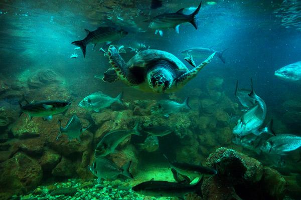 Aquarium d'Elbe
